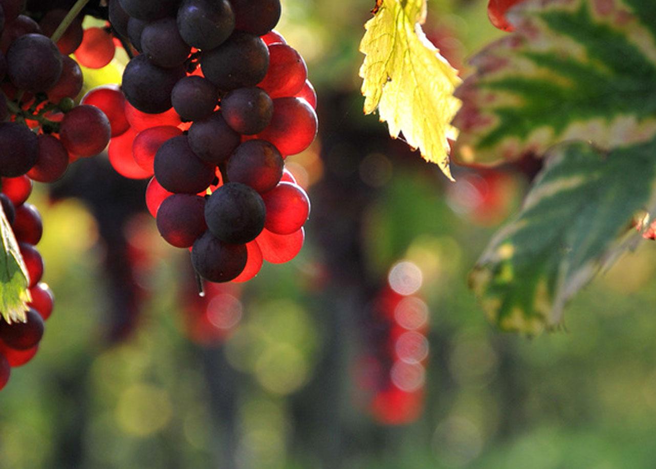 יינות TEVA
